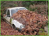 Junk car backed into brush and front covered with leaves