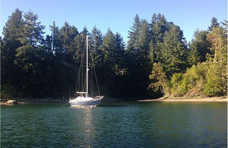 A sailboat docked in a lake next to a forest